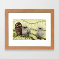 Northern Spotted Owls Framed Art Print