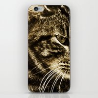 Whiskers iPhone & iPod Skin