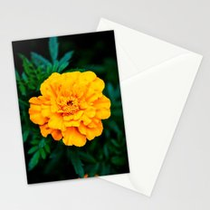 Tangerine Beauty Stationery Cards