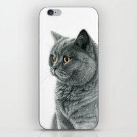 The Chartreux Portrait G… iPhone & iPod Skin