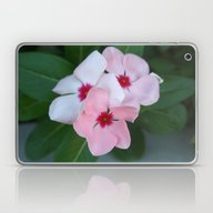 Laptop & iPad Skin featuring Blooming Beautiful Pink … by Taiche