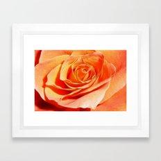 Coral Rose Framed Art Print