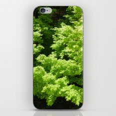 Japanese Maple Green iPhone & iPod Skin