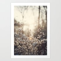 Northern Cotton Art Print