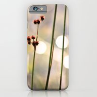 Sunset Lake iPhone 6 Slim Case