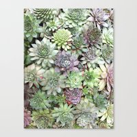Desert Flower II Canvas Print