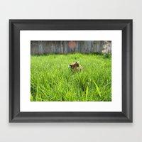 Backyard Wildlife  Framed Art Print