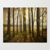 Afternoon Sunlight With … Canvas Print