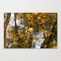 The Leaves Above - Yello… Canvas Print