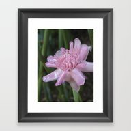Pink Ginger Flower Framed Art Print