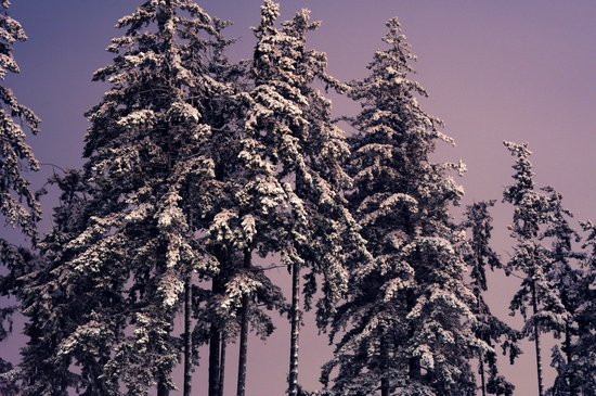 Winters Winter Wintering Art Print