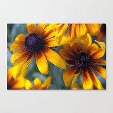 Summer's things - rudbeckia 20 Canvas Print