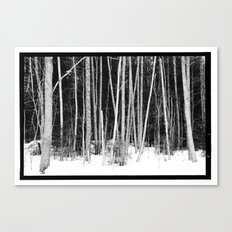 Norwegian forest VIII Canvas Print