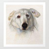 Maremma dog Art Print