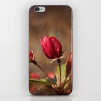 Early Spring iPhone & iPod Skin