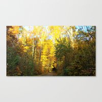Forest In November Canvas Print