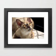 Study of a Cat Framed Art Print