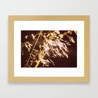 Golden Grass Framed Art Print