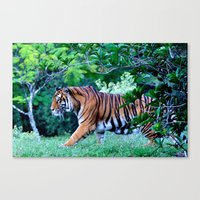 Tigress Canvas Print