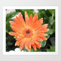 Happy Orange Daisy Art Print