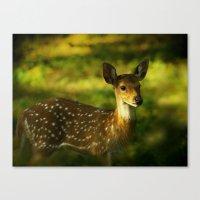 Indian Deer Canvas Print