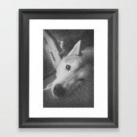 Husky 2 Framed Art Print