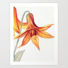 X. Vintage Flowers Botanical Print by Pierre-Joseph Redouté - Meadow Lily Art Print
