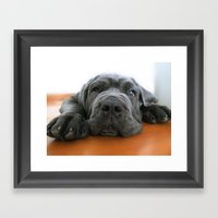 My dog, a Mastino Napoletano puppy, when is bored! Framed Art Print