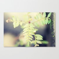 The smallest leaf Canvas Print