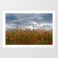 Corn Field Art Print