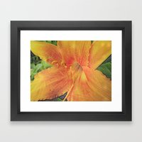 Daylily Dream Framed Art Print