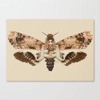 Acherontia Lachesis Canvas Print