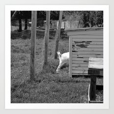 A goat's tale of a tail Art Print