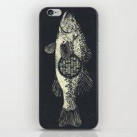 DATABASS iPhone & iPod Skin