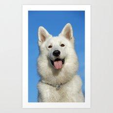 Swiss Shepherd Dog Art Print