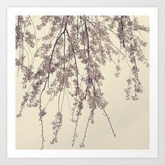 Raintree 2 Lavender pink flower blossoms Art Print