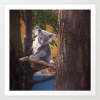 Kozy Koala 2 Art Print