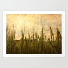 Light in the Grasses Art Print