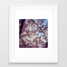 Cherry Blossoms - Washington DC Framed Art Print