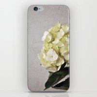 Baby Hydrangeas and Grey iPhone & iPod Skin