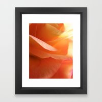 Two-Tone Roses #9 Framed Art Print