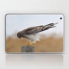 Harrier Laptop & iPad Skin
