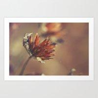 Flower Of Winter Art Print