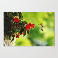 Hummingbird At The Flowe… Canvas Print
