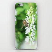 Climbing Bee iPhone & iPod Skin