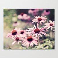 Sweet Daisies Canvas Print
