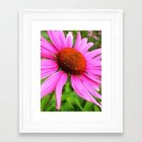coneflower Framed Art Print