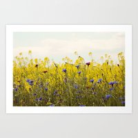 Yellow Wildflowers Art Print
