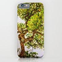 iPhone & iPod Case featuring Curly Pine by LudaNayvelt