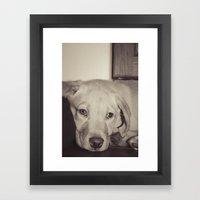 Puppy Dog Framed Art Print